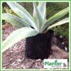 1.5 litre Planter Bags - Polyethylene Growbags - for more info go to PlanterBags.com.au