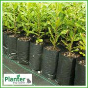 Poly-10-litre-TALL-Plant-Growbags-2