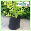2.5 litre Planter Bags - Polyethylene Growbags - for more info go to PlanterBags.com.au