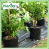 20 litre Squat Planter Bags - Polyethylene Growbags - for more info go to PlanterBags.com.au