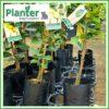 5 litre Tall Planter Bags - Polyethylene Growbags - for more info go to PlanterBags.com.au