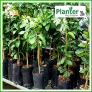 Poly-7-litre-Tall-Plant-Growbags-3