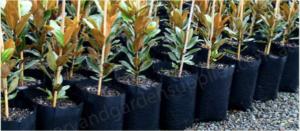 Poly Planter Bags Black - Planter Bag Supplies https://planterbags.com.au/